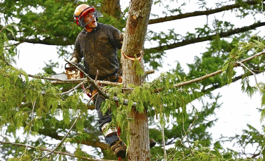 Albuquerque Tree Trimming and Stump Grinding Services Header Image-We Offer Tree Trimming Services, Tree Removal, Tree Pruning, Tree Cutting, Residential and Commercial Tree Trimming Services, Storm Damage, Emergency Tree Removal, Land Clearing, Tree Companies, Tree Care Service, Stump Grinding, and we're the Best Tree Trimming Company Near You Guaranteed!