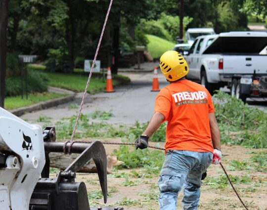 Arborist Consultations-Albuquerque Tree Trimming and Stump Grinding Services-We Offer Tree Trimming Services, Tree Removal, Tree Pruning, Tree Cutting, Residential and Commercial Tree Trimming Services, Storm Damage, Emergency Tree Removal, Land Clearing, Tree Companies, Tree Care Service, Stump Grinding, and we're the Best Tree Trimming Company Near You Guaranteed!