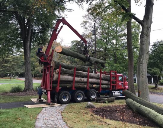 Commercial Tree Services-Albuquerque Tree Trimming and Stump Grinding Services-We Offer Tree Trimming Services, Tree Removal, Tree Pruning, Tree Cutting, Residential and Commercial Tree Trimming Services, Storm Damage, Emergency Tree Removal, Land Clearing, Tree Companies, Tree Care Service, Stump Grinding, and we're the Best Tree Trimming Company Near You Guaranteed!