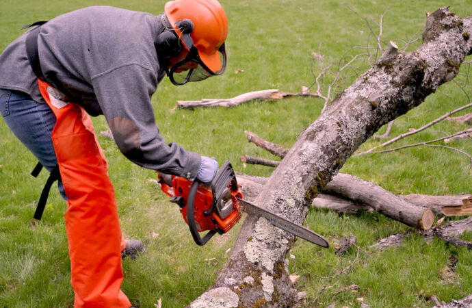 Emergency Tree Removal-Albuquerque Tree Trimming and Stump Grinding Services-We Offer Tree Trimming Services, Tree Removal, Tree Pruning, Tree Cutting, Residential and Commercial Tree Trimming Services, Storm Damage, Emergency Tree Removal, Land Clearing, Tree Companies, Tree Care Service, Stump Grinding, and we're the Best Tree Trimming Company Near You Guaranteed!