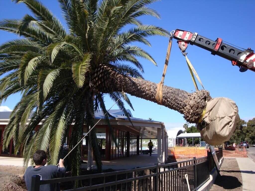 Palm Tree Removal-Albuquerque Tree Trimming and Stump Grinding Services-We Offer Tree Trimming Services, Tree Removal, Tree Pruning, Tree Cutting, Residential and Commercial Tree Trimming Services, Storm Damage, Emergency Tree Removal, Land Clearing, Tree Companies, Tree Care Service, Stump Grinding, and we're the Best Tree Trimming Company Near You Guaranteed!