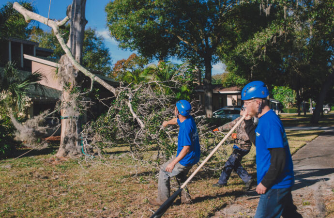 Residential Tree Services-Albuquerque Tree Trimming and Stump Grinding Services-We Offer Tree Trimming Services, Tree Removal, Tree Pruning, Tree Cutting, Residential and Commercial Tree Trimming Services, Storm Damage, Emergency Tree Removal, Land Clearing, Tree Companies, Tree Care Service, Stump Grinding, and we're the Best Tree Trimming Company Near You Guaranteed!