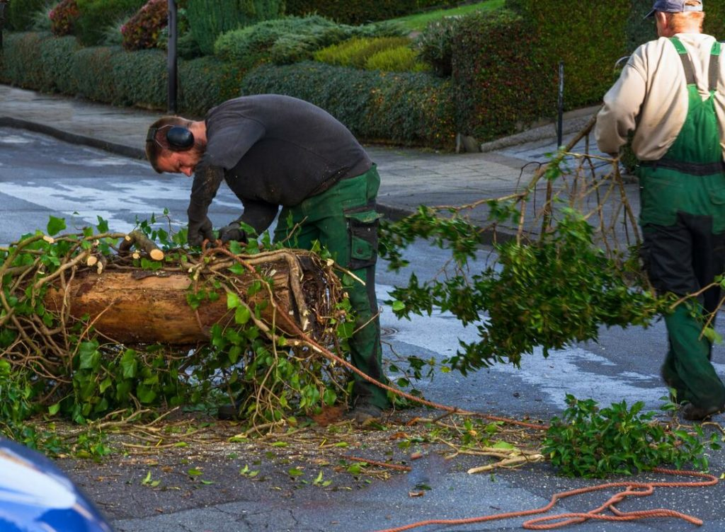 Services-Albuquerque Tree Trimming and Stump Grinding Services-We Offer Tree Trimming Services, Tree Removal, Tree Pruning, Tree Cutting, Residential and Commercial Tree Trimming Services, Storm Damage, Emergency Tree Removal, Land Clearing, Tree Companies, Tree Care Service, Stump Grinding, and we're the Best Tree Trimming Company Near You Guaranteed!