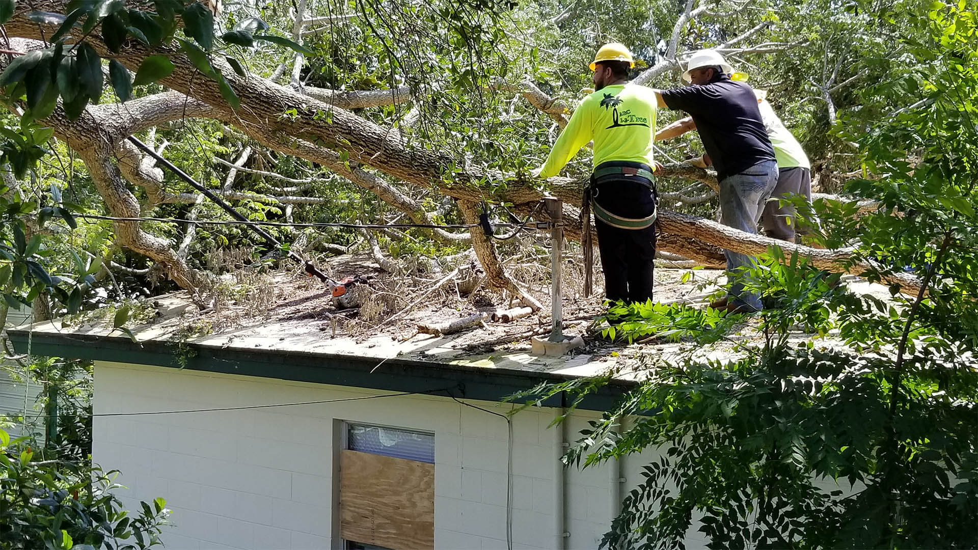 Storm Damage-Albuquerque Tree Trimming and Stump Grinding Services-We Offer Tree Trimming Services, Tree Removal, Tree Pruning, Tree Cutting, Residential and Commercial Tree Trimming Services, Storm Damage, Emergency Tree Removal, Land Clearing, Tree Companies, Tree Care Service, Stump Grinding, and we're the Best Tree Trimming Company Near You Guaranteed!