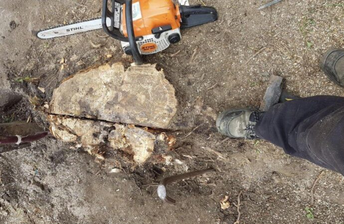 Stump Removal-Albuquerque Tree Trimming and Stump Grinding Services-We Offer Tree Trimming Services, Tree Removal, Tree Pruning, Tree Cutting, Residential and Commercial Tree Trimming Services, Storm Damage, Emergency Tree Removal, Land Clearing, Tree Companies, Tree Care Service, Stump Grinding, and we're the Best Tree Trimming Company Near You Guaranteed!