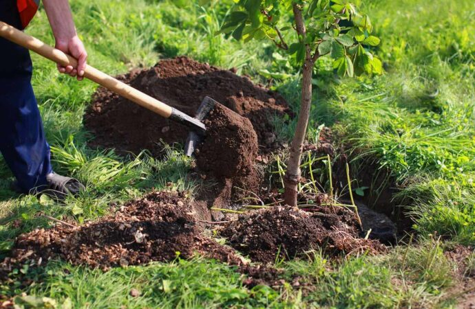 Tree Planting-Albuquerque Tree Trimming and Stump Grinding Services-We Offer Tree Trimming Services, Tree Removal, Tree Pruning, Tree Cutting, Residential and Commercial Tree Trimming Services, Storm Damage, Emergency Tree Removal, Land Clearing, Tree Companies, Tree Care Service, Stump Grinding, and we're the Best Tree Trimming Company Near You Guaranteed!