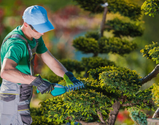 Tree Pruning-Albuquerque Tree Trimming and Stump Grinding Services-We Offer Tree Trimming Services, Tree Removal, Tree Pruning, Tree Cutting, Residential and Commercial Tree Trimming Services, Storm Damage, Emergency Tree Removal, Land Clearing, Tree Companies, Tree Care Service, Stump Grinding, and we're the Best Tree Trimming Company Near You Guaranteed!