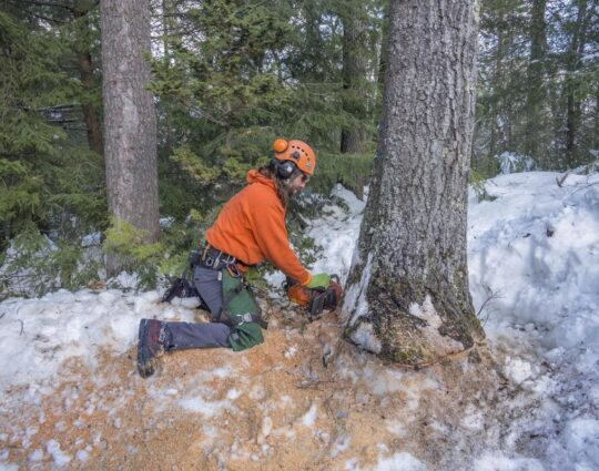 Tree Removal-Albuquerque Tree Trimming and Stump Grinding Services-We Offer Tree Trimming Services, Tree Removal, Tree Pruning, Tree Cutting, Residential and Commercial Tree Trimming Services, Storm Damage, Emergency Tree Removal, Land Clearing, Tree Companies, Tree Care Service, Stump Grinding, and we're the Best Tree Trimming Company Near You Guaranteed!