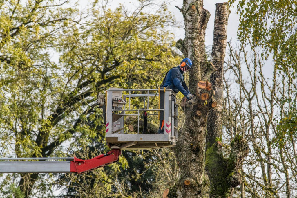 Tree Trimming-Albuquerque Tree Trimming and Stump Grinding Services-We Offer Tree Trimming Services, Tree Removal, Tree Pruning, Tree Cutting, Residential and Commercial Tree Trimming Services, Storm Damage, Emergency Tree Removal, Land Clearing, Tree Companies, Tree Care Service, Stump Grinding, and we're the Best Tree Trimming Company Near You Guaranteed!
