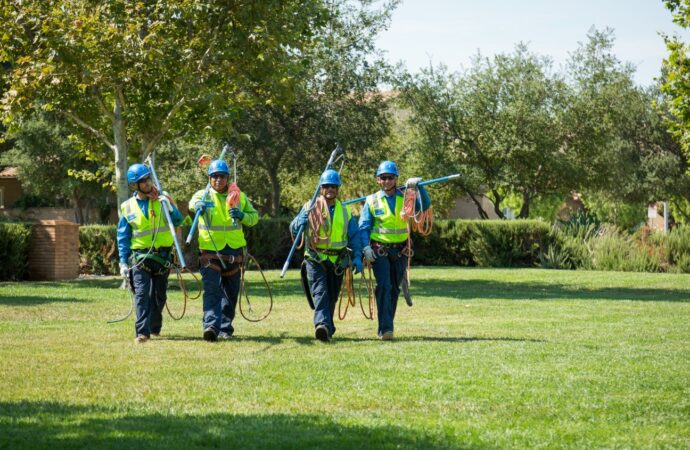 Bernalillo-Albuquerque Tree Trimming and Stump Grinding Services-We Offer Tree Trimming Services, Tree Removal, Tree Pruning, Tree Cutting, Residential and Commercial Tree Trimming Services, Storm Damage, Emergency Tree Removal, Land Clearing, Tree Companies, Tree Care Service, Stump Grinding, and we're the Best Tree Trimming Company Near You Guaranteed!