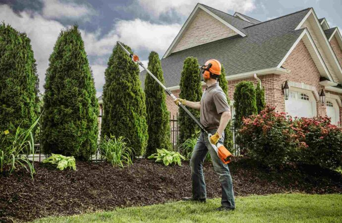 Carnuel-Albuquerque Tree Trimming and Stump Grinding Services-We Offer Tree Trimming Services, Tree Removal, Tree Pruning, Tree Cutting, Residential and Commercial Tree Trimming Services, Storm Damage, Emergency Tree Removal, Land Clearing, Tree Companies, Tree Care Service, Stump Grinding, and we're the Best Tree Trimming Company Near You Guaranteed!