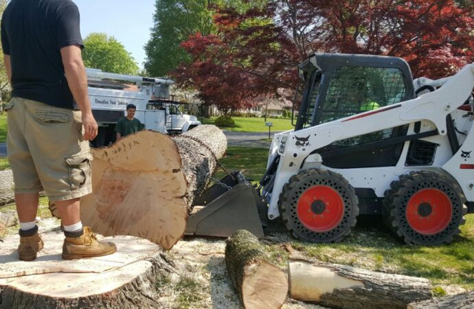 Rio Rancho-Albuquerque Tree Trimming and Stump Grinding Services-We Offer Tree Trimming Services, Tree Removal, Tree Pruning, Tree Cutting, Residential and Commercial Tree Trimming Services, Storm Damage, Emergency Tree Removal, Land Clearing, Tree Companies, Tree Care Service, Stump Grinding, and we're the Best Tree Trimming Company Near You Guaranteed!