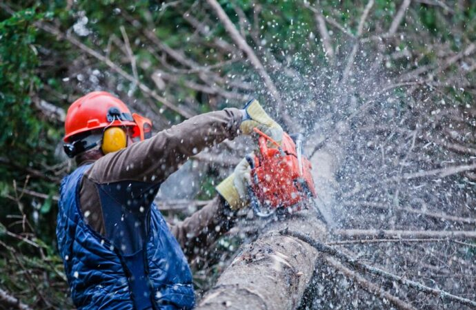 Sandia Heights-Albuquerque Tree Trimming and Stump Grinding Services-We Offer Tree Trimming Services, Tree Removal, Tree Pruning, Tree Cutting, Residential and Commercial Tree Trimming Services, Storm Damage, Emergency Tree Removal, Land Clearing, Tree Companies, Tree Care Service, Stump Grinding, and we're the Best Tree Trimming Company Near You Guaranteed!
