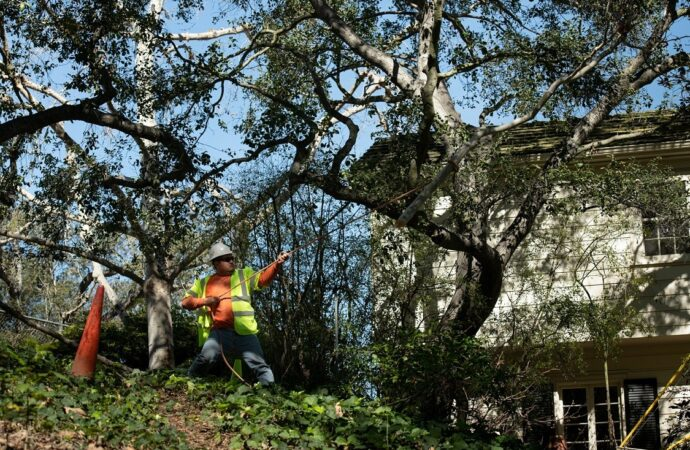 South Valley-Albuquerque Tree Trimming and Stump Grinding Services-We Offer Tree Trimming Services, Tree Removal, Tree Pruning, Tree Cutting, Residential and Commercial Tree Trimming Services, Storm Damage, Emergency Tree Removal, Land Clearing, Tree Companies, Tree Care Service, Stump Grinding, and we're the Best Tree Trimming Company Near You Guaranteed!