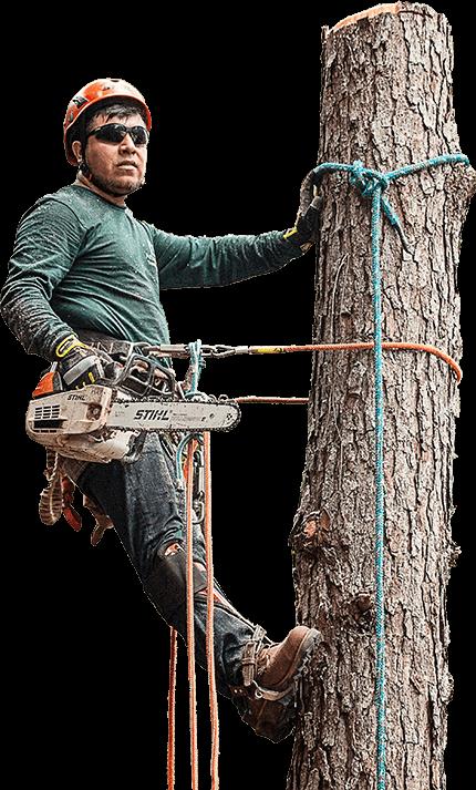 tree-man-treecarealbuquerque
